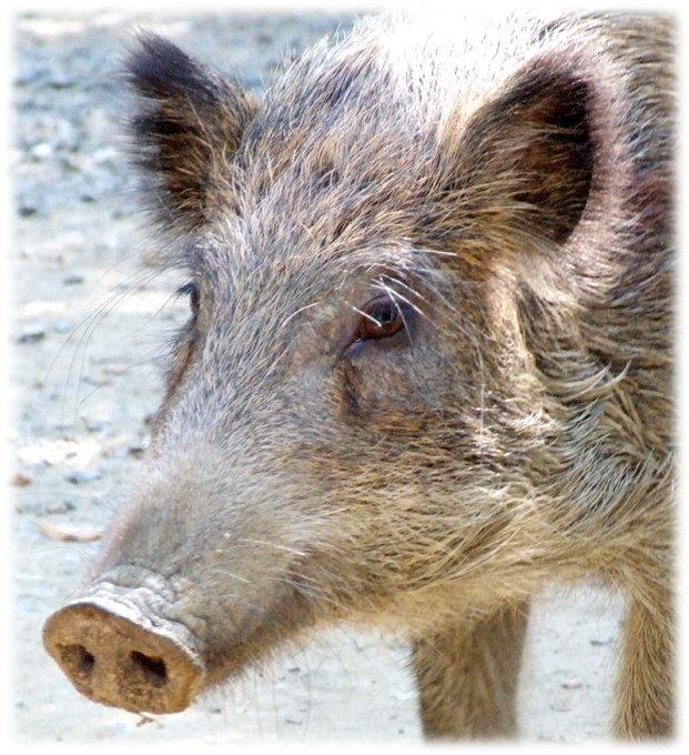 Miyazaki Prefecture woman shot by hunter after being mistaken for a wild boar