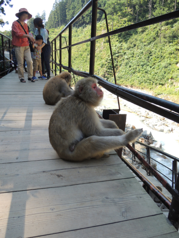 Hanging out with the monkeys at cageless Jigokudani Monkey Park 【Photos】