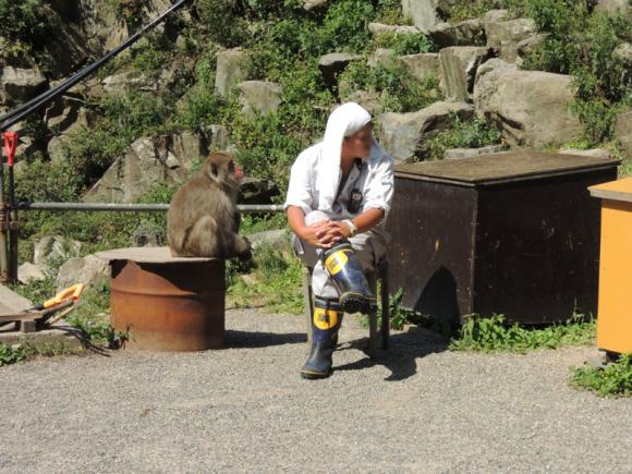 Jigokudani monkey (10)