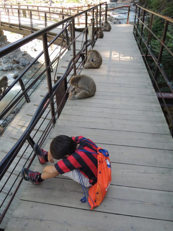 Jigokudani monkey (6)