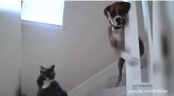 Cowardly dogs unable to face their greatest enemy: Cats【Video】