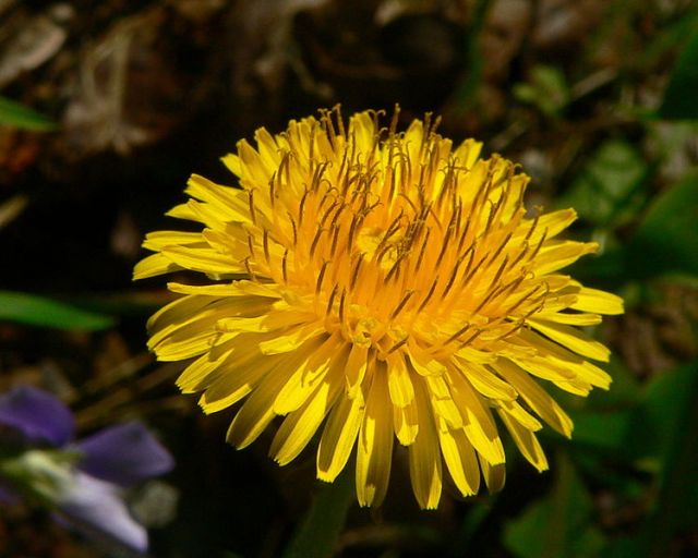Doctors in China rescue young girl from freak dandelion attack