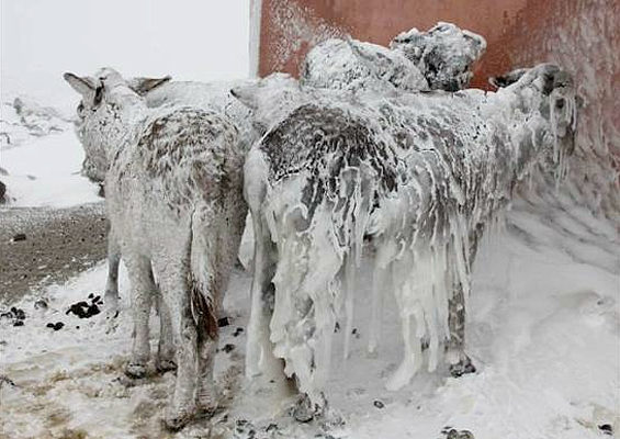 Turkish cold snap literally freezes animals where they stand