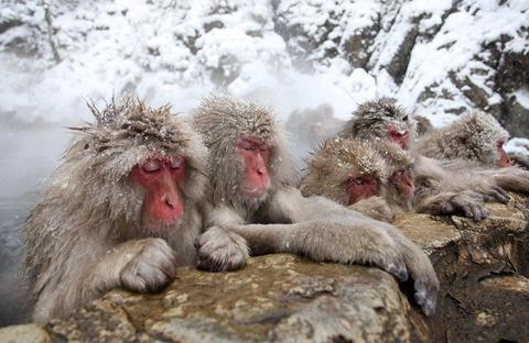 地獄谷の猿たち02_2