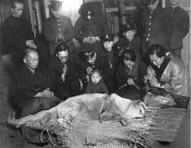 The last photo of faithful dog Hachiko breaks our hearts