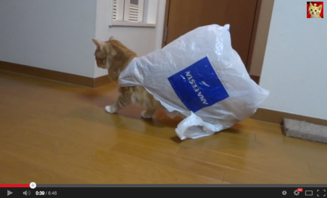 """Damn it human, help me!"" One cat's epic battle with an empty plastic bag"