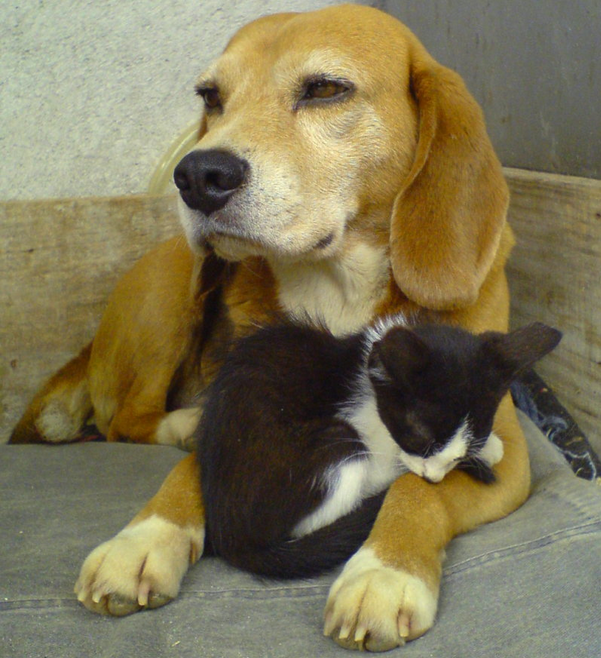 Top 5 dog and cat breeds in Japan 2013