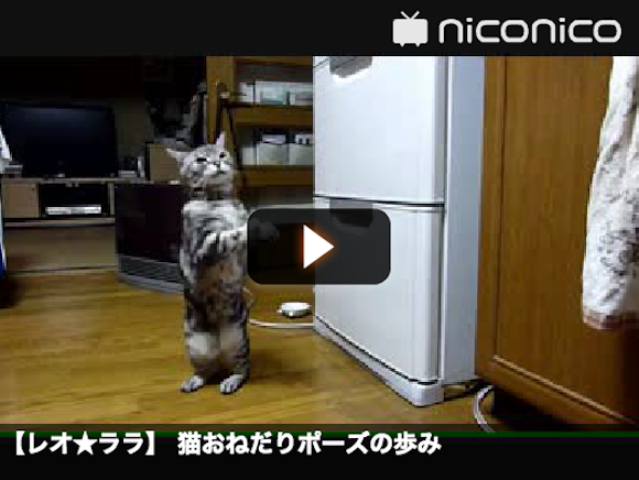 The evolution of one cat's pestering skills 【Video】