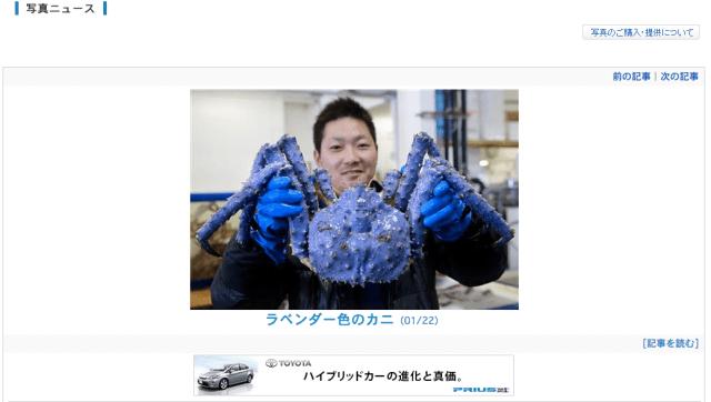 Seamen in Hokkaido shocked to discover bright lavender crab