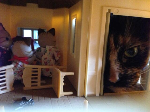 Clan of giant cats attacks Japanese family