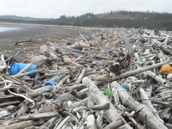 70 Japanese students volunteer to help clean Canada's shores of Tohoku Tsunami debris