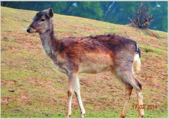 Autopsy of deer in a Chinese zoo reveals startling cause of death