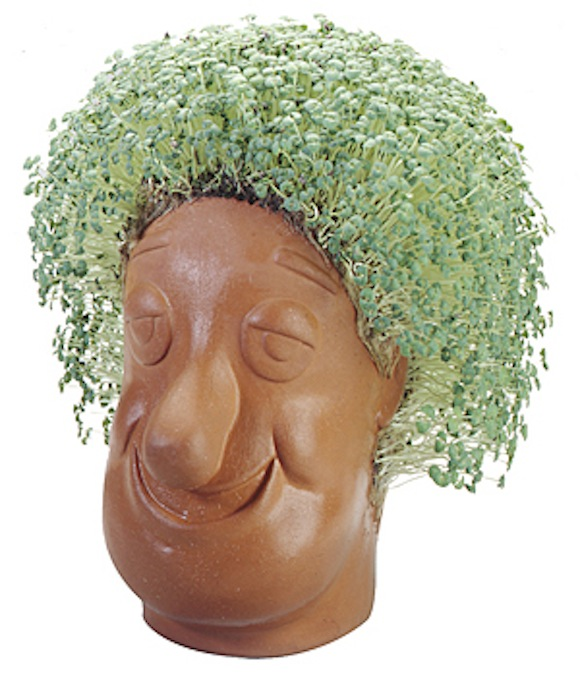 Study shows broccoli sprouts may regrow hair, and not just on Chia Heads