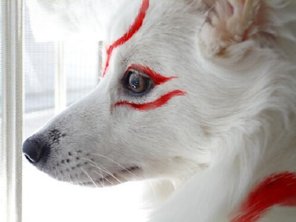 Okami cosplay: It's for the dogs!