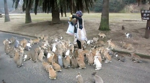 Bunny stampede! The joys of Rabbit Island【Video】