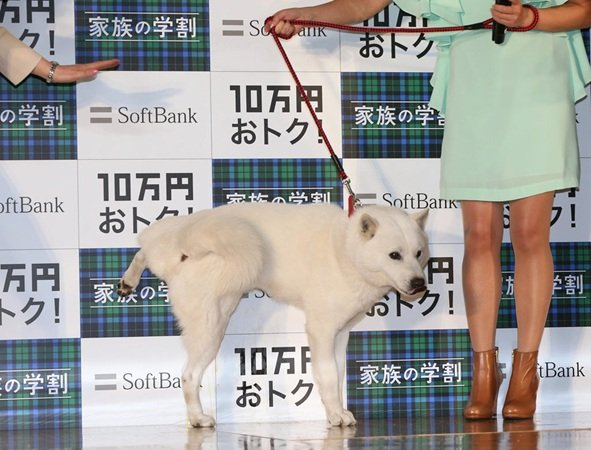 SoftBank's mascot dog behaving badly at bizarre press conference