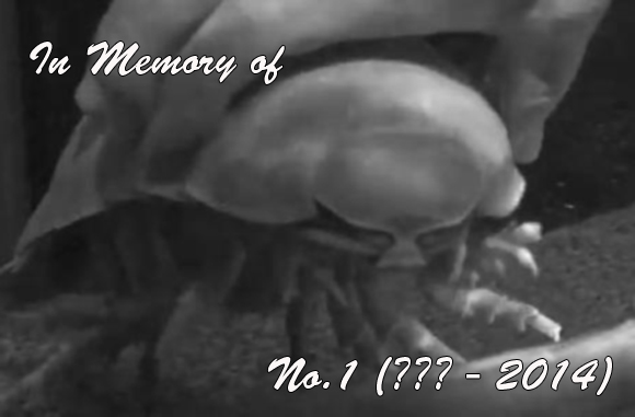 "【Obituary】 Giant isopod ""No.1"" found dead after more than five years of not eating"