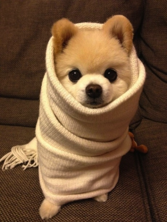 20 yummy animal burritos to satisfy your cute cravings!【Photos】