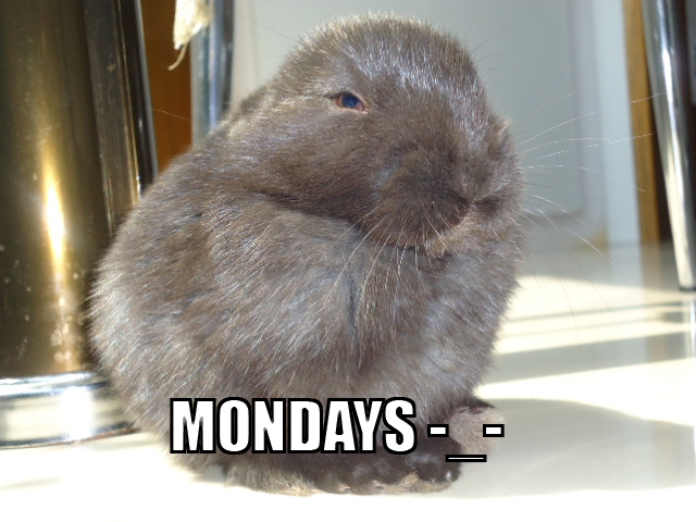 Banish the Monday blues with bunnies! 【Monday Kickstart】