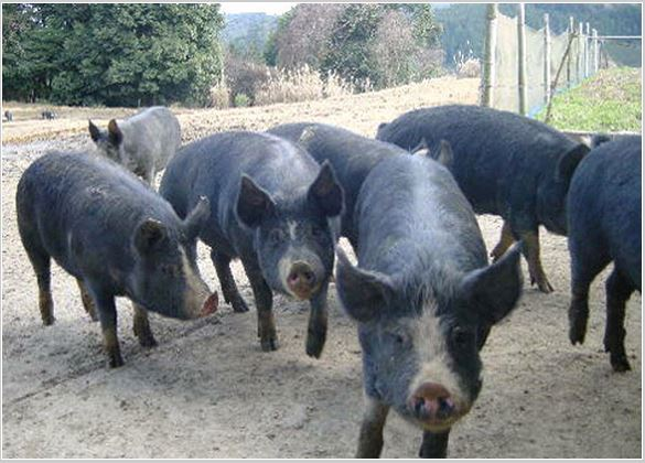 US Ambassador Kennedy's comment about pork irritates Japanese netizens