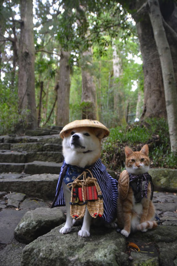 This Shiba Inu and his kitty best friend are too adorable to ignore!【Photos】