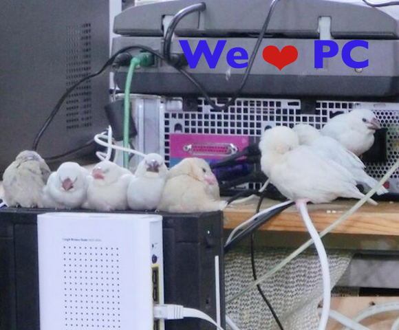 Computer equipment: the new way to keep your pet birds warm and happy?