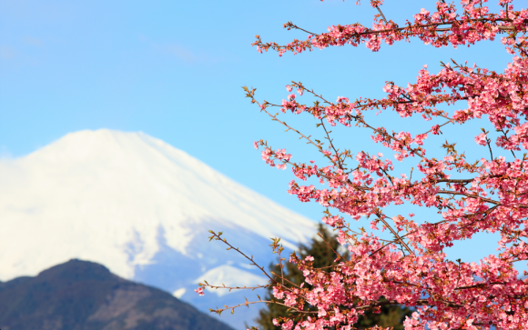 There's something about sakura: It's hard not to fall in love with Japan's cherry blossom【Videos】