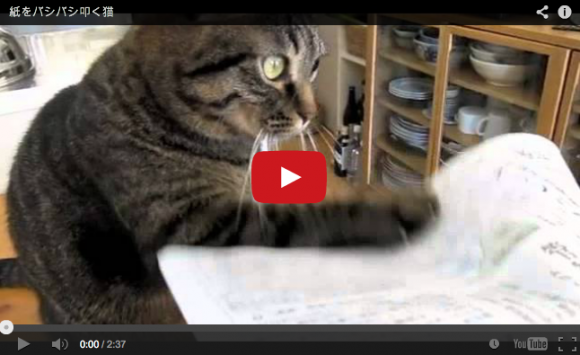 """Hey! Hey! Hey! Hey!"" Meet the Japanese cat that loves to tap 【Videos】"