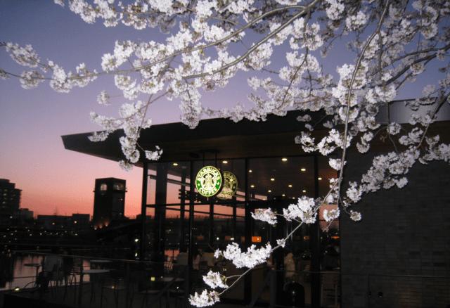 Six sensational Starbucks for sakura spectators