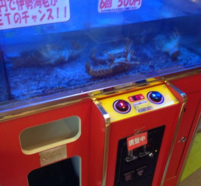 Lobsters offered as prizes for claw game all found dead, foul play suspected