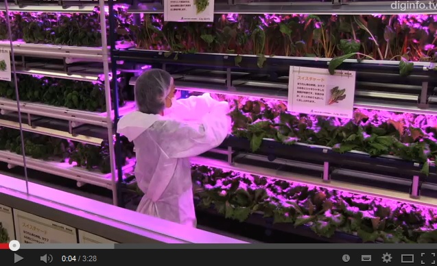 LED plant factories offer efficient 3D alternative to traditional gardening