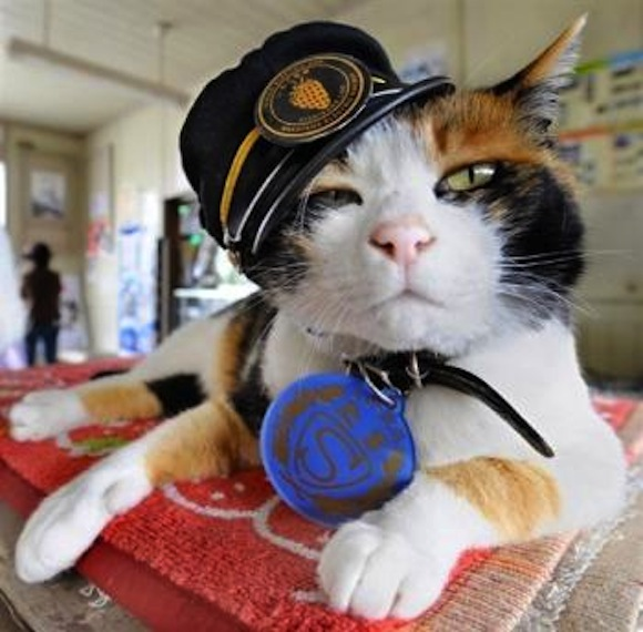 Stray animals, trash cans and national dress: 10 things you probably never realised about Japan