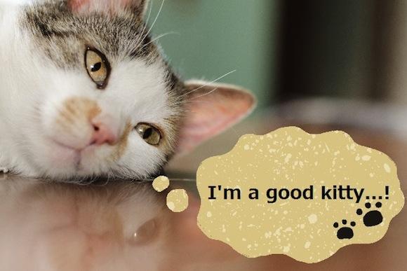 kotowaza cat good with text