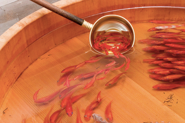 【TBT】Japanese artist paints breathtakingly lifelike 3-D goldfish using layers of resin