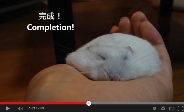 The humane (and adorable) way to make a flat hamster 【Video】