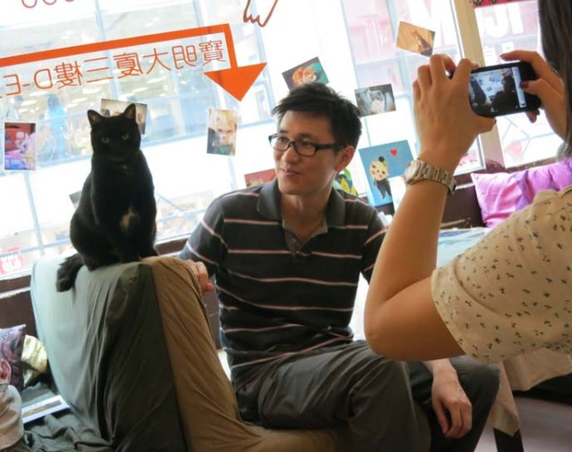 Take a peek inside a Hong Kong cat cafe