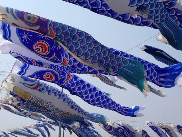 Tohoku man honors brother killed in tsunami with hundreds of blue carp streamers