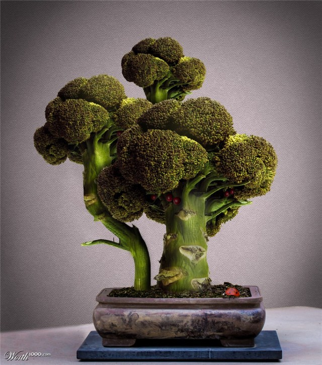 Broccoli bonsai and sweet sushi: Japanese culture's evolution abroad【Photos】