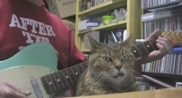 Zen cat proves the ultimate high comes from music【Video】