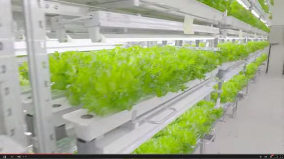 Food by Fujitsu: Rise of the super veggie!