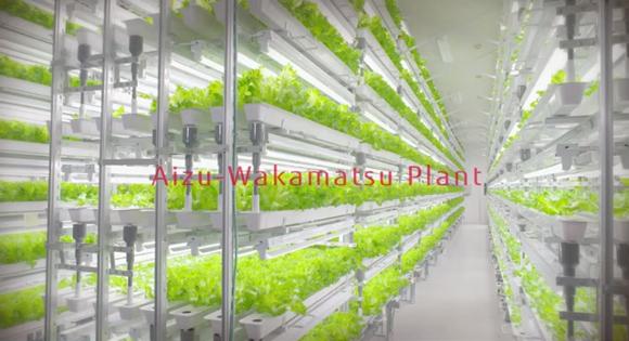 aizu wakamatsu plant