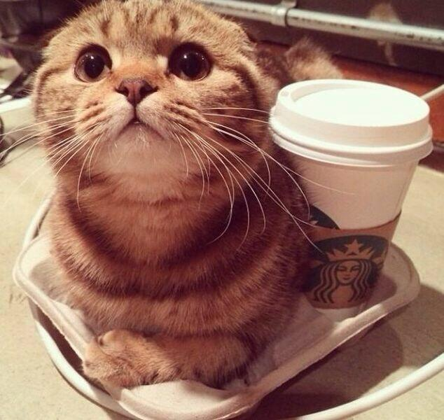 Coffee and cats are the perfect combo to help you face the week【Monday Kickstart】
