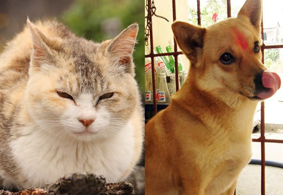 Who earns more: cat lovers or dog lovers?