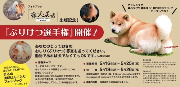 Cute animal bottoms now on display — It's Shiba Dog Maru's Puriketsu Contest!