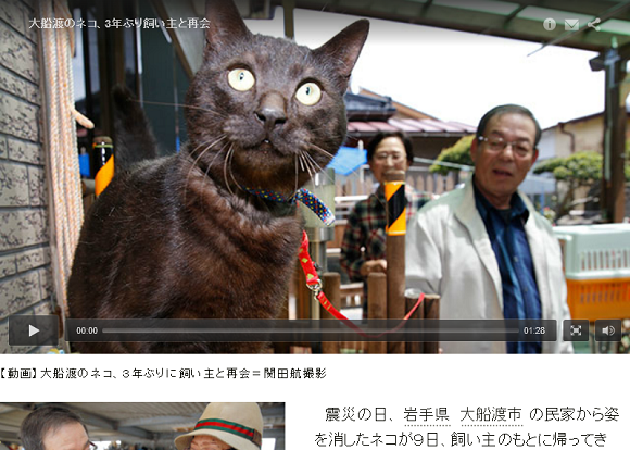Grab some tissues: Beloved cat lost in Tohoku disaster comes home over three years later