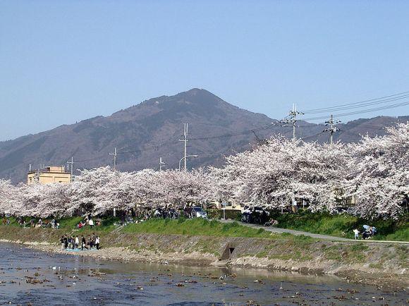 800px-Sakura_MtHiei