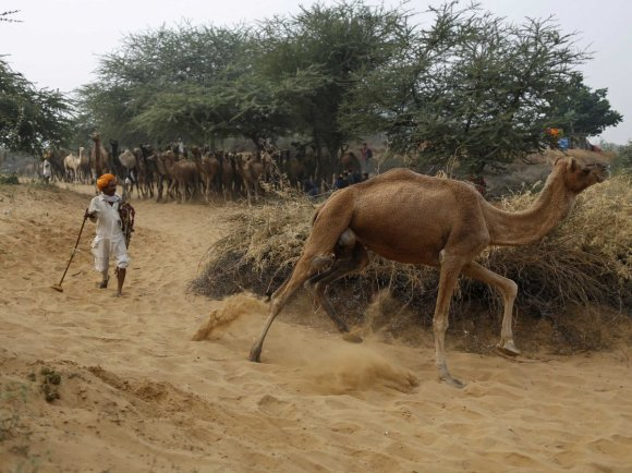 about-25-of-indias-land-is-turning-into-desert--thats-the-equivalent-of-three-united-kingdoms