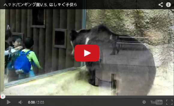 Viral zoo video of 'headbanging' bear hides a dark, sad truth