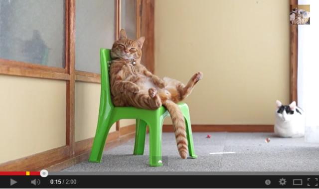 Cheerful, cherubic cat chillin' on a chair 【Video】