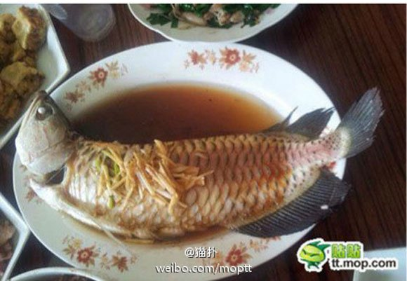 Chinese woman's two-pronged money-saving plan: Eat her grandson's pet for dinner